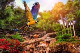 Papageien – Unsere bunt gefiederten Freunde