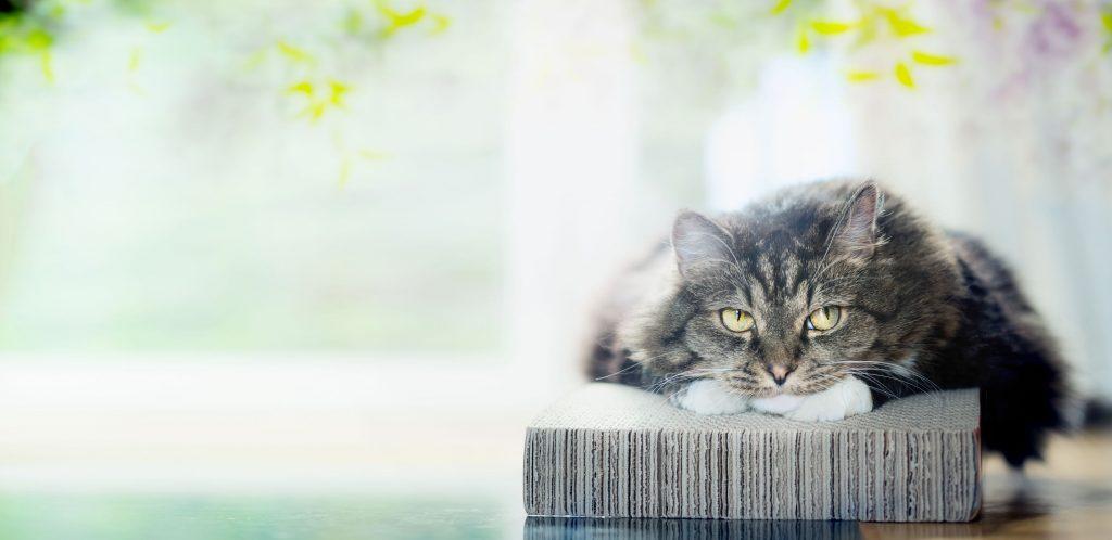 Depressionen bei der Katze