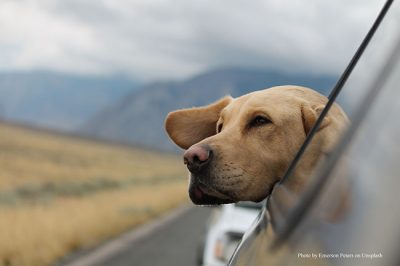 Hund_Reisen_ESCCAP