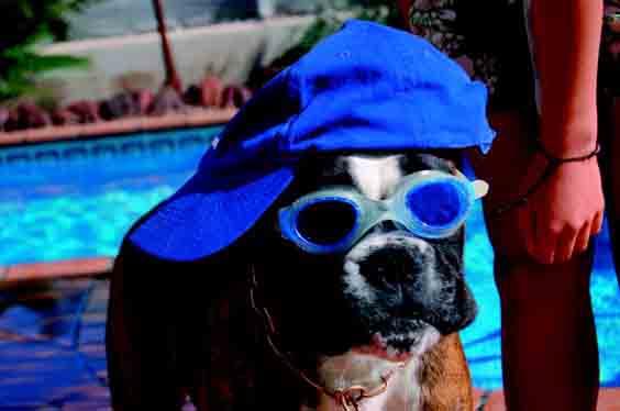Urlaub-mit-Hund-1