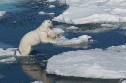 Eisbär, Fotoquelle: 123RF