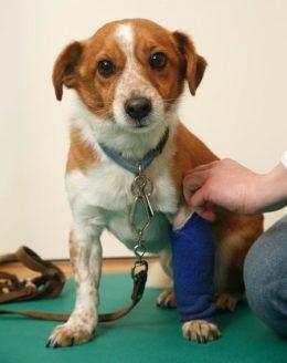 Erstversorgung beim Hund – auch Erste Hilfe bei Tieren muss man lernen.
