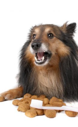 Gesunde Zähne sollten wir auch dem Hund gönnen (Fotoquelle: 123RF).