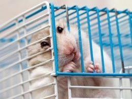 Was tun, wenn der Hamster am Käfig nagt? Fotoquelle: 123RF
