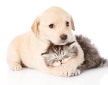 Fototquelle: 123RF; Nachwuchs von Hund und Katze