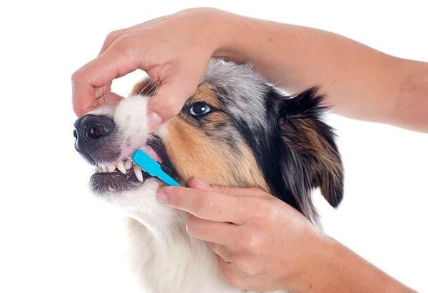 Zahnpflege beim Hund, Fotoquelle: 123RF