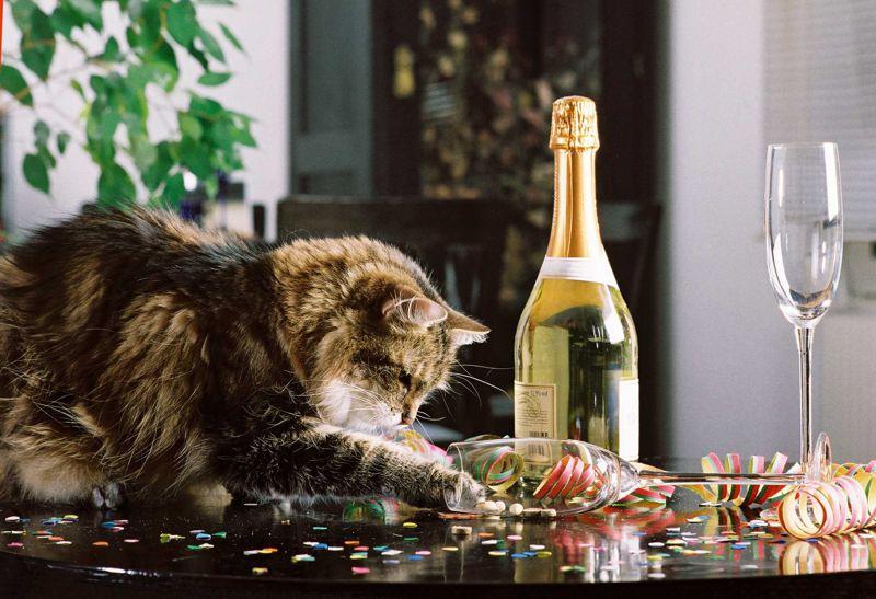 Tiere an Silvester abschirmen, Fotoquelle: IVH