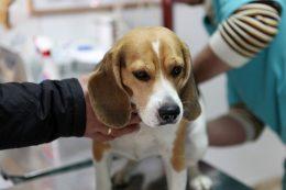 Tierarztkosten bei der Operation von Hunden oder Katzen können schnell vierstellig werden.