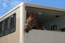 Hier finden Sie Tipps, wie man mit seinem Pferd sicher reisen kann (Fotoquelle: 123RF).