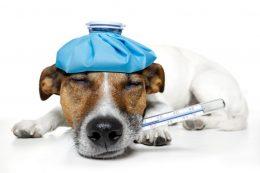 Besser planen und sich über die Tiernotdienste an Feiertagen informieren.