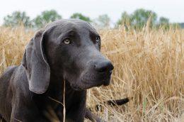 dog-1587084