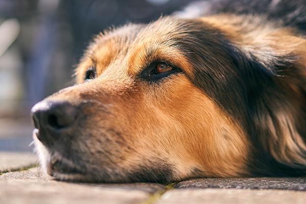 dog-4432747